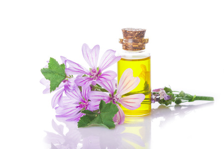 Mallow extrac or essential oil in a little jar with malva flowers isolated on a white background