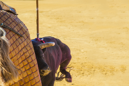 mistreatment: Details of animal abuse to the bull in Spanish bullfights Stock Photo