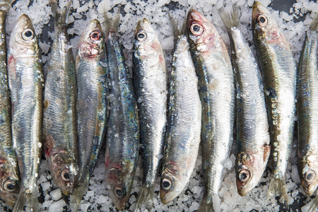 Fresh sardines or pilchards on a coarse salt layer over a slate background