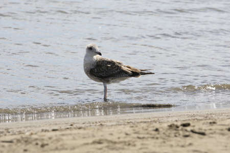 young seagull posed on the beach Stock Photo - 11800491