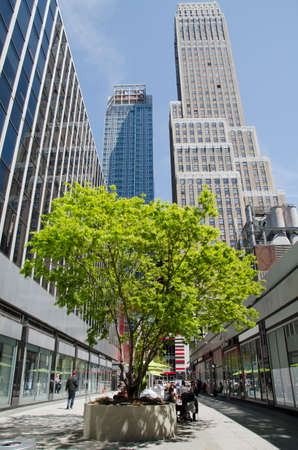 New York City, USA - May 03, 2015: tree in Manhattan between buildings, urban spring