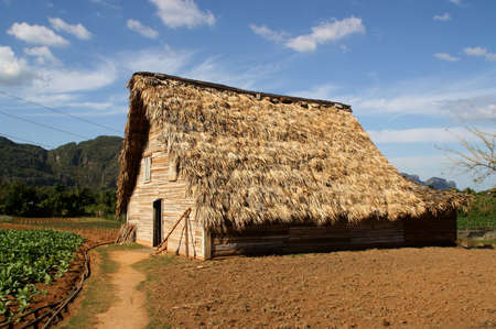 Shelter in a farm to dry tobacco leaves