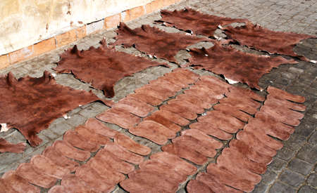 Traditional tanning of the skin in Marrakech. Skins spread on the floor for air drying.