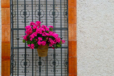 A geranium of pink flowers in a window with bars of a traditional town house in Andalusia (Sanlúcar de Guadiana, Spain).