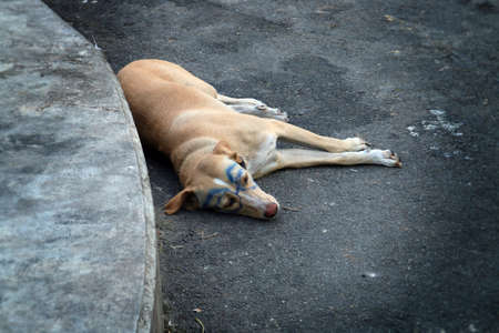 Dog with glasses drawn. Mischief in Bangkok, Thailand.