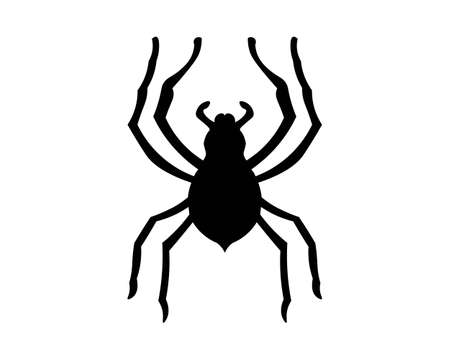 Spider vector and insect animal Illusztráció