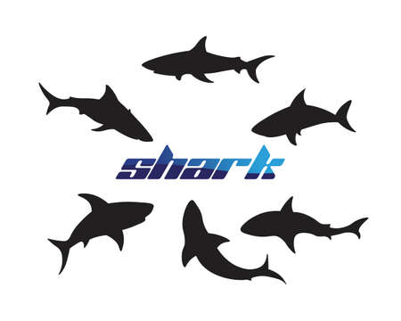 Shark Template and design vector fish wild sea animal