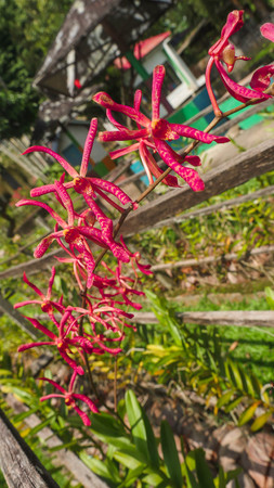 rare red orchids are in bloom