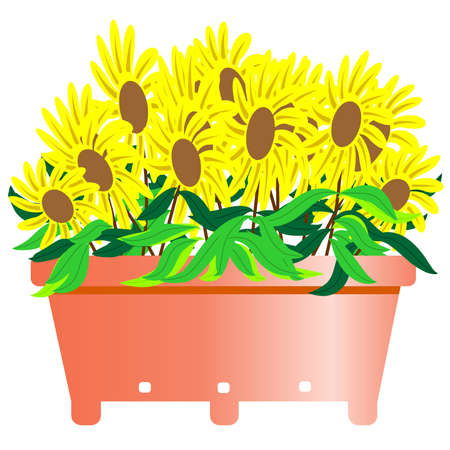 back yard: Black Eyed Sun Flower Illustration