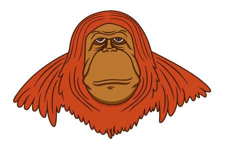 sumatran: Orangutan Image