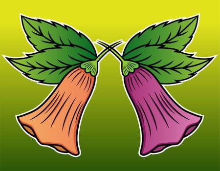 anticholinergic: Brugmansia or Angels Trumpet Flower Illustration
