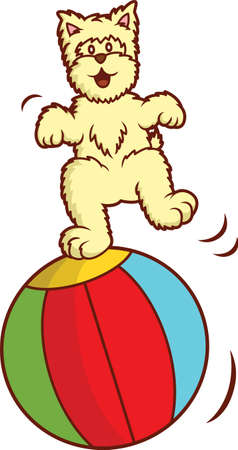 big ball: Westie Dog Playing with Big Ball Cartoon Illustration Isolated on White Illustration