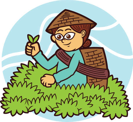 Tea Picker Cartoon Illustration