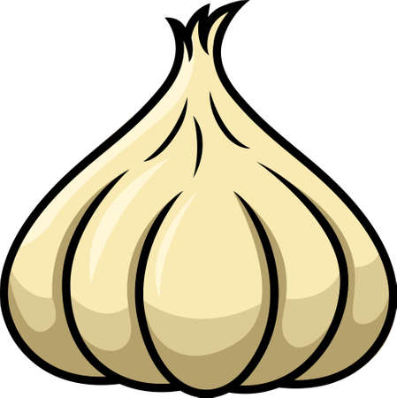 clove plant: Garlic Illustration Isolated on White