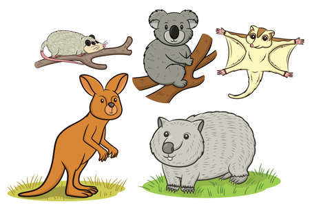 possum: Marsupial Animals Cartoon