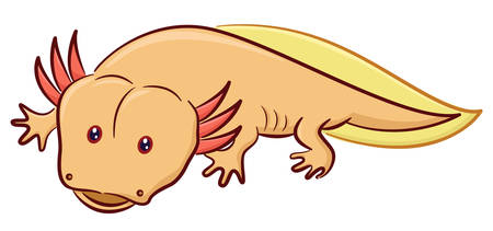 Axolotl the Mexican Salamander Cartoon Animal Character Isolated on White Background