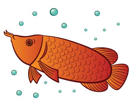 Arowana Fish Swimming with Water Bubbles Cartoon Illustration