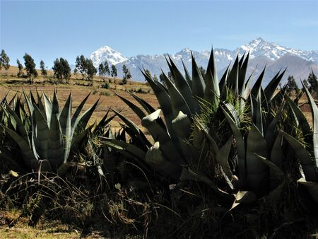 agave: Agave plants and Mount Veronica, Peru Foto de archivo