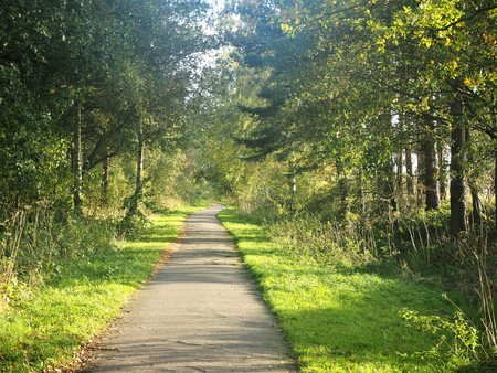 walking paths: Footpath lined with grass verges and trees with dappled light near York, UK Stock Photo