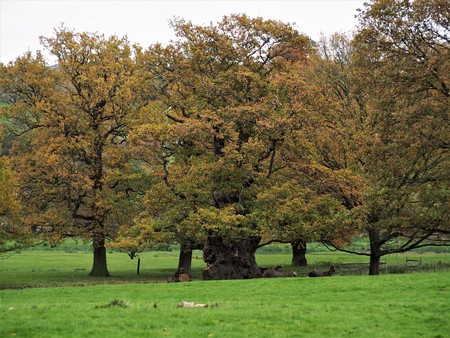 Trees with autumn colours, Ripley, North Yorkshire, UK Stock Photo