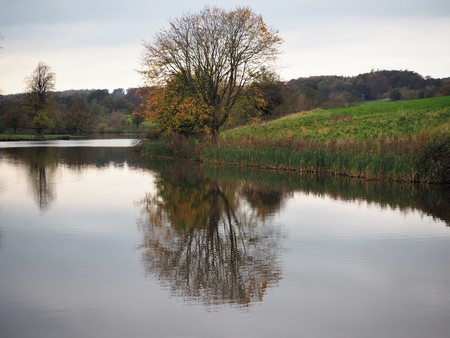 Tree reflected on the surface of a lake, Ripley, North Yorkshire, UK