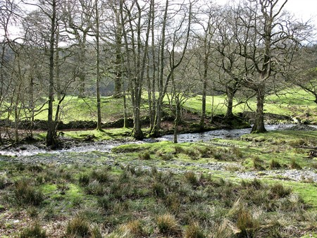 Trees growing beside a stream flowing through the North Yorkshire Moors National Park, England Stock Photo