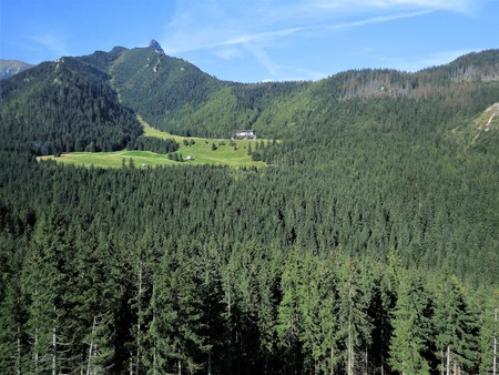 Pine forest and a green meadow in the High Tatra Mountains near Zakopane, Poland