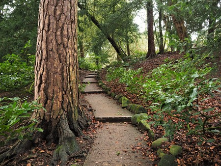 Stepped path through woodland with an ancient tree trunk Stock Photo