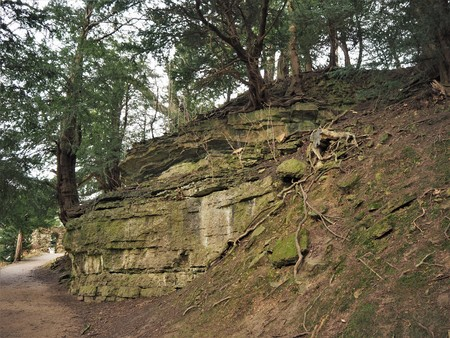 Trees growing on a steep eroded slope by a path in a park