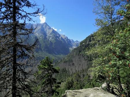View of the High Tatra mountains between trees, Slovakia Stock Photo
