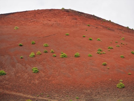 Plants growing on the red oxidised surface of Montana Colorada volcano, Lanzarote Stock Photo
