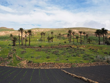 Palm trees and cultivation in black volcanic soil near Haria, Lanzarote Stock Photo
