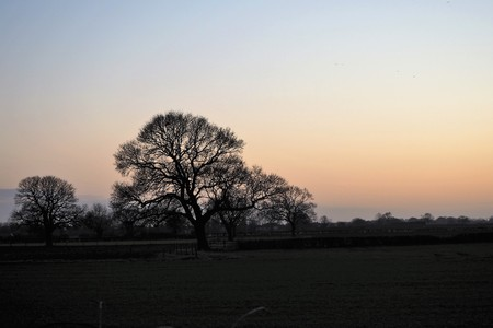 Bare tree in winter silhouetted against the sky at twilight near York, England