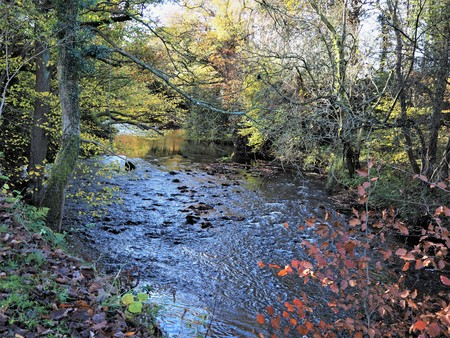 River Derwent and surrounding trees in autumn at Gibside near Gateshead, England