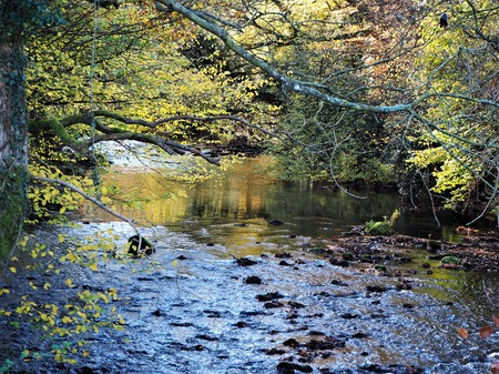 River Derwent and trees at Gibside near Gateshead, England, in autumn