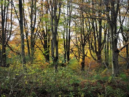Sunlight shining through trees in autumn at Wallington, Northumberland, England Stock Photo