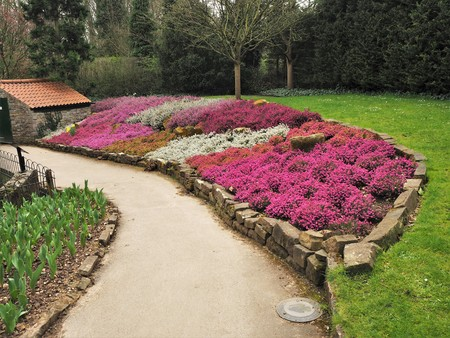Mixed heather plants flowering in a flower bed in a park