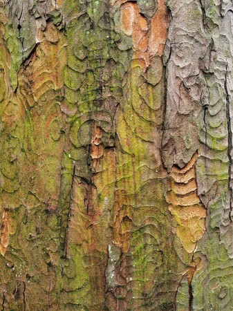 Colours and textures in a section of bark on a tree trunk