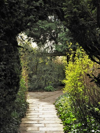 Paved path through an arch formed by a hedge in a garden with sunlight Stock Photo