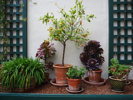 Potted plants growing in a conservatory against a white wall with green lattice