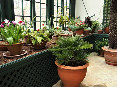 Potted plants growing in a conservatory with a window and green lattice Stock Photo