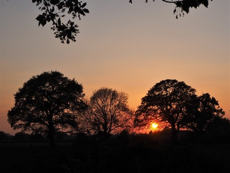 Sun setting behind a group of silhouetted trees near York, England