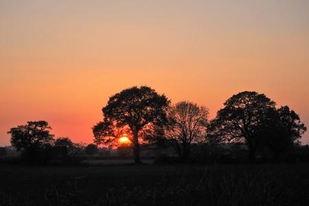 Sun setting behind silhouetted trees with an orange sky near York, England