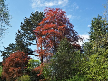 Colourful trees against a blue sky in spring in Yorkshire