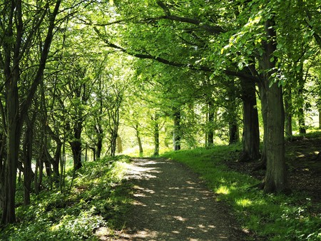 Shady path through trees forming part of the Cleveland Way near Swainby, North Yorkshire