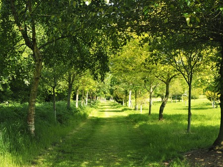 Shady grass path through trees with dappled sunlight in spring Stock Photo