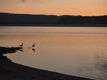 Two seagulls in the Kent River estuary near Arnside, Cumbria, England, at sunset Stock Photo