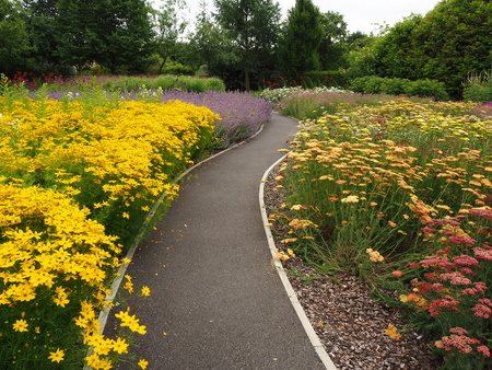 Winding path through colourful flower beds in a garden in summer