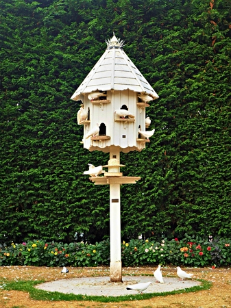 White dovecote with white doves against a green hedge in a garden
