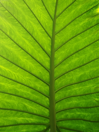 Closeup of the underside of a palm leaf Stock Photo